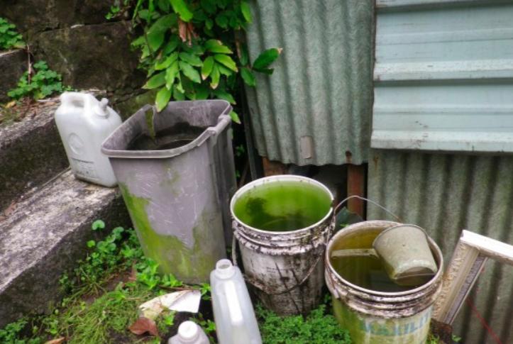 登革熱防治-容器-積水